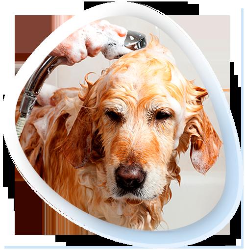 E:\Google Driver\Pontal Cursos\Produtos\Site\Cursos\Como Montar um Banho e Tosa em Casa\Materiais